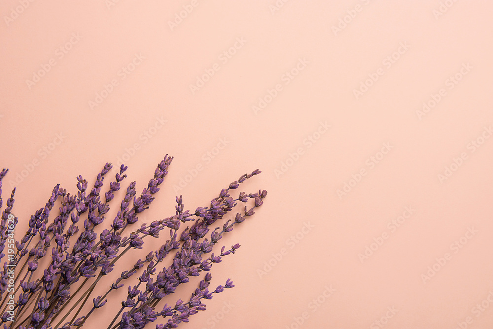 Fototapety, obrazy: Twigs of Lavender Flowers Arranged in Lower Border on Solid Pink Background. Easter Mother's Day Wedding Wellness Cosmetics Concept. Minimalist Style. Website Banner Template Copy Space