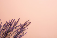 Twigs Of Lavender Flowers Arranged In Lower Border On Solid Pink Background. Easter Mother's Day Wedding Wellness Cosmetics Concept. Minimalist Style. Website Banner Template Copy Space