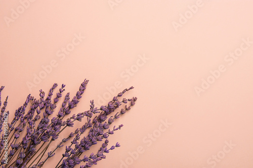 Twigs Of Lavender Flowers Arranged In Lower Border On Solid Pink Background Easter Mother S Day
