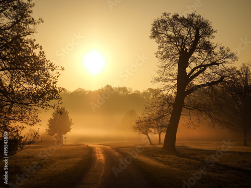 Stickers pour portes Orange eclat Bare trees covered with morning mist in Windsor Great Park at sunrise.