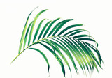 Palm leaves on white background. - 195563201
