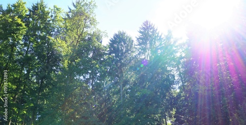 Deurstickers Lichtroze Wald mit Sonne