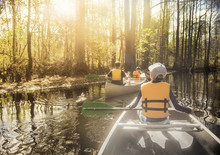 People Canoeing Down Beautiful River In A Cypress Forest