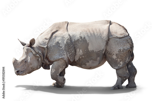 Spoed Foto op Canvas Neushoorn a large adult rhino is standing sideways.