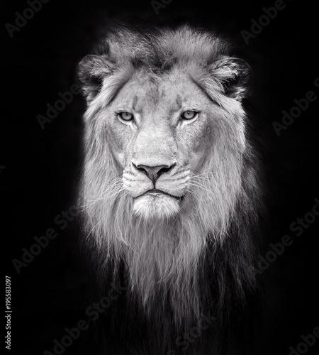 Foto op Plexiglas Leeuw Face of a male lion.