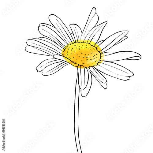 Photo vector drawing flower of daisy