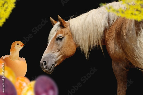 Fotografia  Ostermotiv: Pferd mit Küken