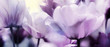 tulips pink violet ultra subdued