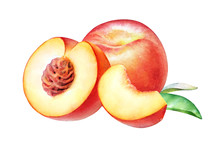 Watercolor Realistic Botanical...