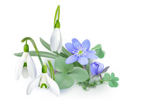 Bunch Of Forest Flowers, Messengers Of Spring - Background. Wildflowers As Snowdrops And Liverwort Blooming On The Forest Floor. Vector Illustration, Realistic Style, White Background.