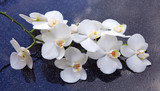 Fototapeta Kuchnia - Spa background with white orchid.