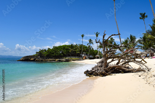 Foto op Canvas Cathedral Cove Beautiful beach with white sand, palms, turquoise ocean and waves, blue sky, old tree