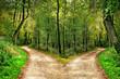 canvas print picture - Wald mit Wegen in zwei Richtungen