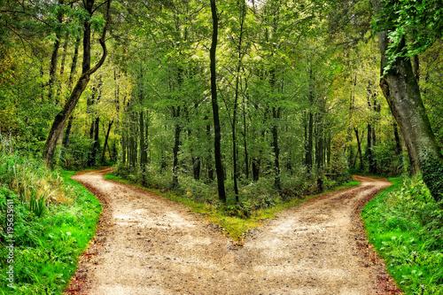 Fototapeta  Wald mit Wegen in zwei Richtungen