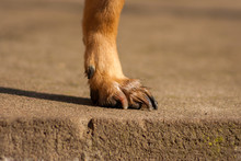 Brown-orange Dog's Paws