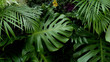 Green tropical leaves Monstera, palm, fern and ornamental plants backdrop background