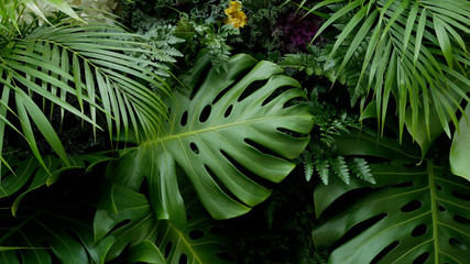 Obraz na SzkleGreen tropical leaves Monstera, palm, fern and ornamental plants backdrop background