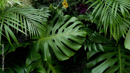 Fényképezés  Green tropical leaves Monstera, palm, fern and ornamental plants backdrop backgr