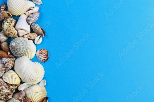 Conchiglie Di Mare Su Sfondo Azzurro Buy This Stock Photo And