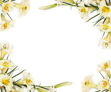 Frame Of White Trumpet Lilies On A White Background With Space For Text. Top View, Flat Lay