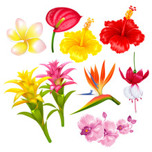 Tropical Exotic Flowers Set