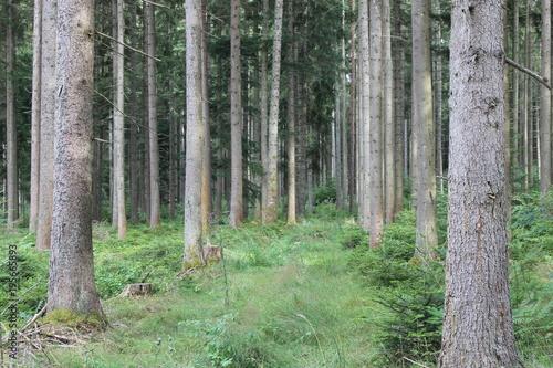 Cadres-photo bureau Foret brouillard Der Wald ist noch grün