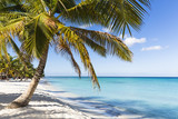 Fototapeta Las - Scenic view of coconut palm trees on the white sand beach