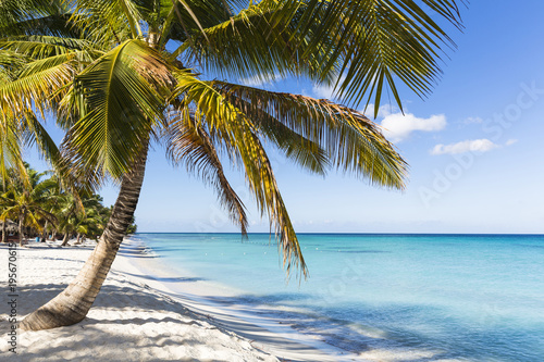 Staande foto Strand Coconut palm trees and white beach by turquoise water, Parque Nacional del Este, Dominican Republic, Caribbean