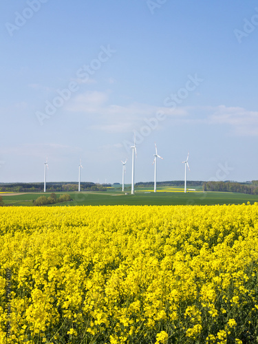 Wind turbines with canola field in foreground, Weser Hills, North Rhine-Westphalia, Germany