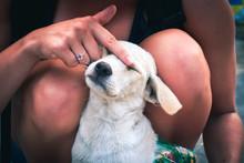 Puppy Enjoys Being Pet