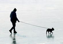 Young Man With His Pug Dog Wal...