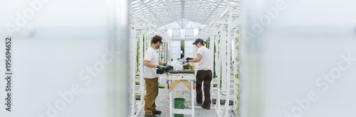 Young sustainable farmers enjoying work in the greenhouse