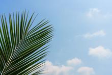 Leaf Fan Under Blue Sky