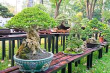 Green Bonsai Tree In A Pot Pla...
