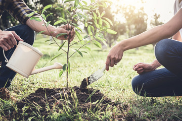 Young couple planting the tree while Watering a tree working in the garden as save world concept, nature, environment and ecology