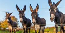 A Lovely Donkey Family On The ...