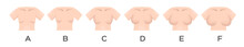 Breast Size And Type Vector