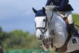 Fototapeta Horses - Schimmel springt über Hindernis