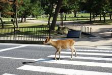 Deer At The Street
