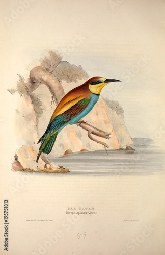 Illustration of a bird Fototapete