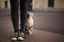 Caring For Homeless Pets Conce...