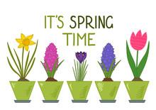 It's Spring Time. Daffodil, Tu...