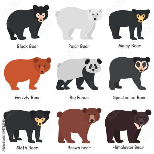 Fotografía  Different bears breeds color flat icons set