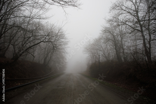 Fototapety, obrazy: Landscape with beautiful fog in forest on hill or Trail through a mysterious winter forest with autumn leaves on the ground. Road through a winter forest. Magical atmosphere. Azerbaijan