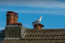 Squawking Seagull On Top Of Th...