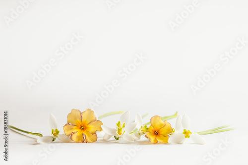 Fotografie, Obraz  Romantischer Blumenrahmen mit Schneeglöckchen und Primeln auf hellem Hintergrund