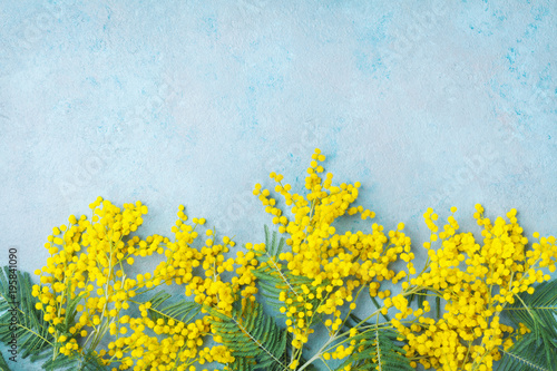 In de dag Narcis Yellow mimosa flower on turquoise table top view. Spring greeting card for Mothers day, 8 March or Easter.