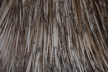 Dry Palm Leaves Texture