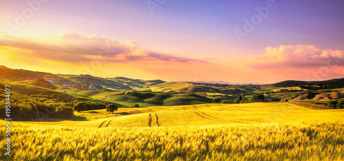 Foto auf AluDibond Orange Tuscany spring, rolling hills at sunset. Rural landscape. Whaet, green fields and trees Italy