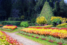 Alley Of Colorful Flowers, Ornamental Bushes And Trees In The Royal Botanical Garden, Kandy. Sri Lanka